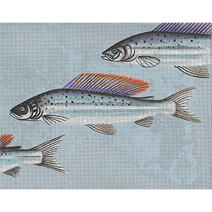 Leigh Designs - Hand-painted Needlepoint Canvases - Arctic Char Canvas