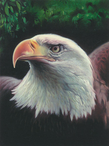 Majestic Eagle  - Collection d'Art Needlepoint Canvas