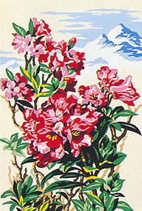 SEG de Paris Needlepoint - Mountain Flowers