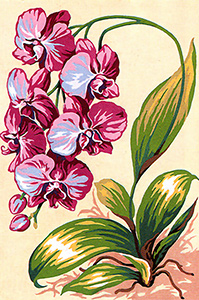 SEG de Paris Needlepoint - Small Needlepoint Canvases - Orchids Canvas