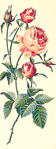 SEG de Paris Needlepoint - Red Roses