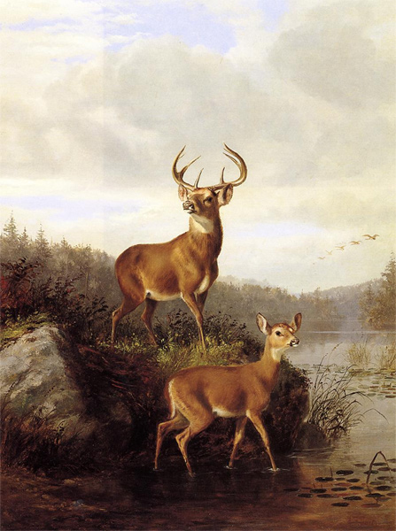 Buck & Doe II by Arthur Fitzwilliam Tait