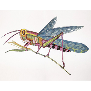 Large Grasshopper - Hand-Painted Needlepoint Tapestry Canvas from Trubey Designs